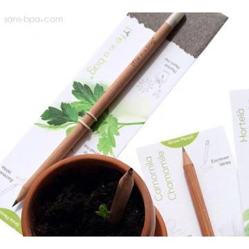 Crayon à graines aromatiques - Camomille