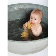 Les animaux de la mare, jeux de bain caoutchouc naturel - Hevea